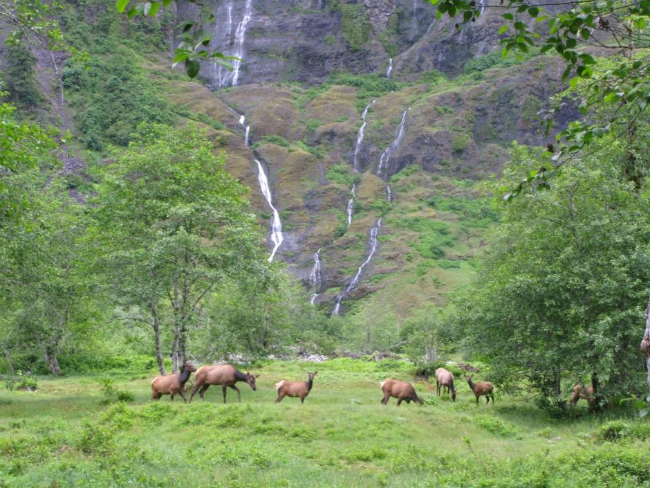 Elk in the Enchanted Valley